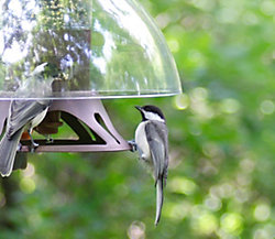 Perky-Pet® Fortress® The Bird Shelter Squirrel Resistant Bird Feeder