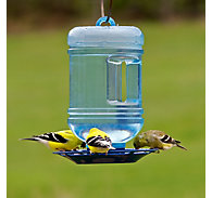 Perky-Pet® Water Cooler Bird Waterer - 1.5 qt Water Capacity