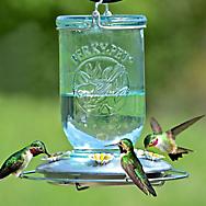 Perky-Pet® Mason Jar Glass Hummingbird Feeder - 32 oz Nectar Capacity