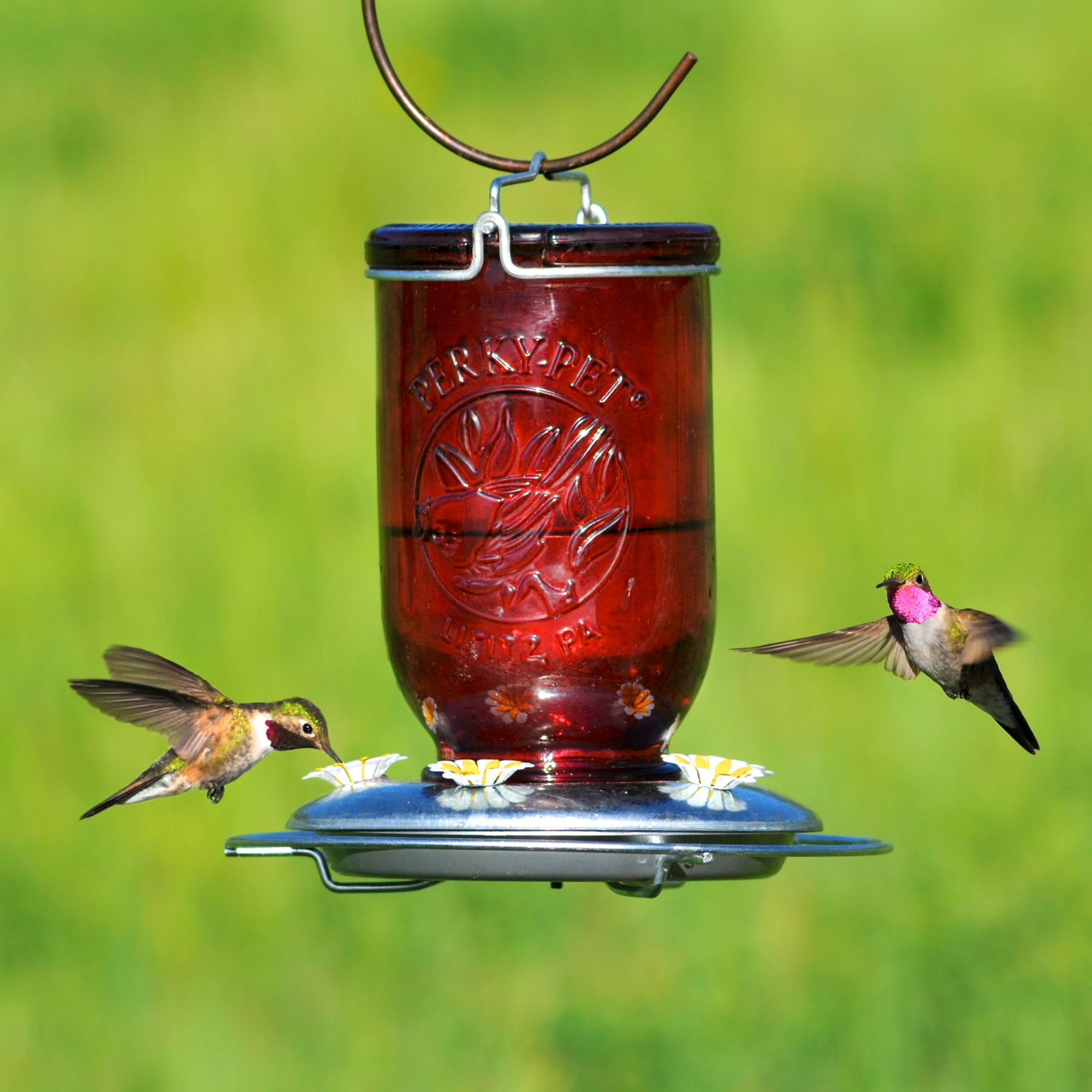 us model hummingbird perkypet bf com pet perky mason decorative glass red jar feeder feeders