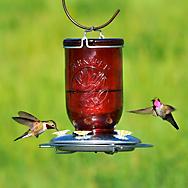 Perky-Pet® Red Mason Jar Glass Hummingbird Feeder - 32 oz Nectar Capacity
