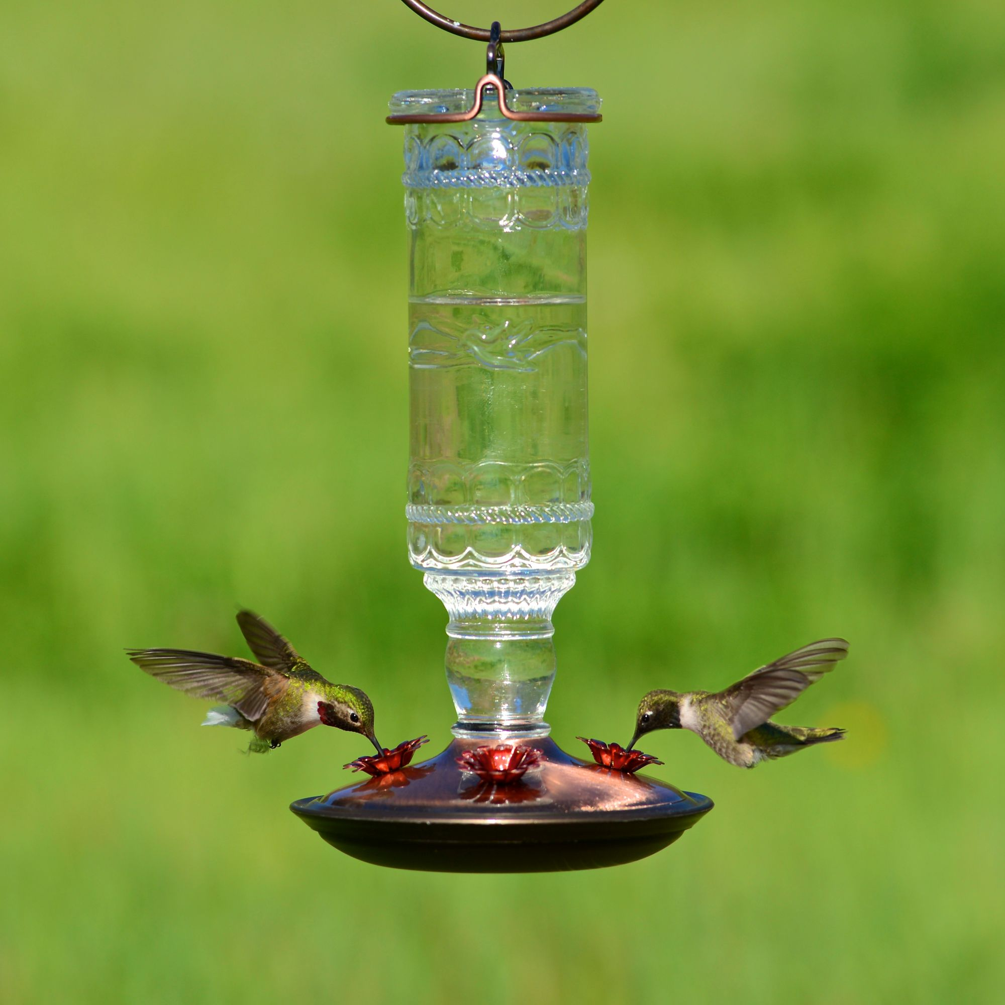 With the Perky-Pet Pinch-Waist Glass Hummingbird Feeder, entertaining hummingbirds in your backyard has never been easier. It's the classic design that you know and love with a few great updates, including a new and improved wide-mouth bottle.