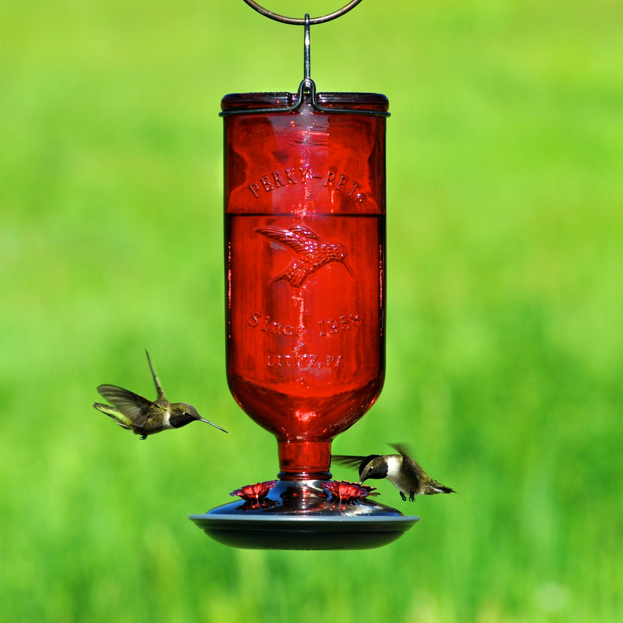 Perky Pet 174 Antique Bottle Glass Hummingbird Feeder Model