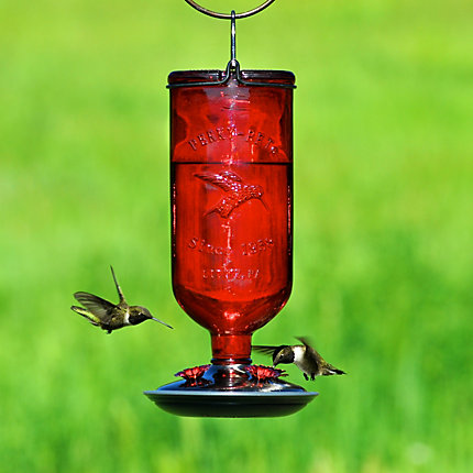 with on dealing feeders wars hanging porch our img daybreak looking blog at richard back hummingbird feeder