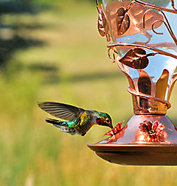 Looking Glass Hummingbird Feeder