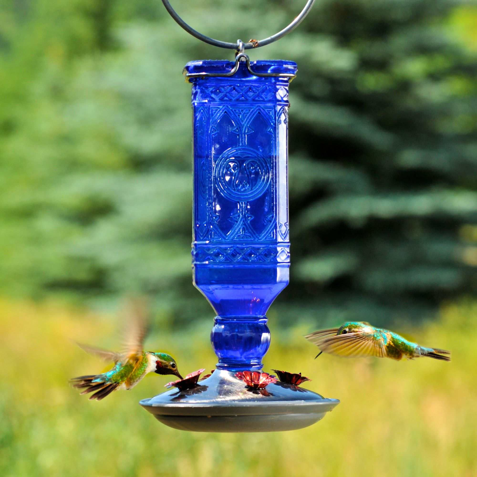 unique hummingbird and glass ounces decorative premium feeder feeders natures bird home by red best globe product products nectar hand yellow with blown hummingbirds of pet reviews rave birds