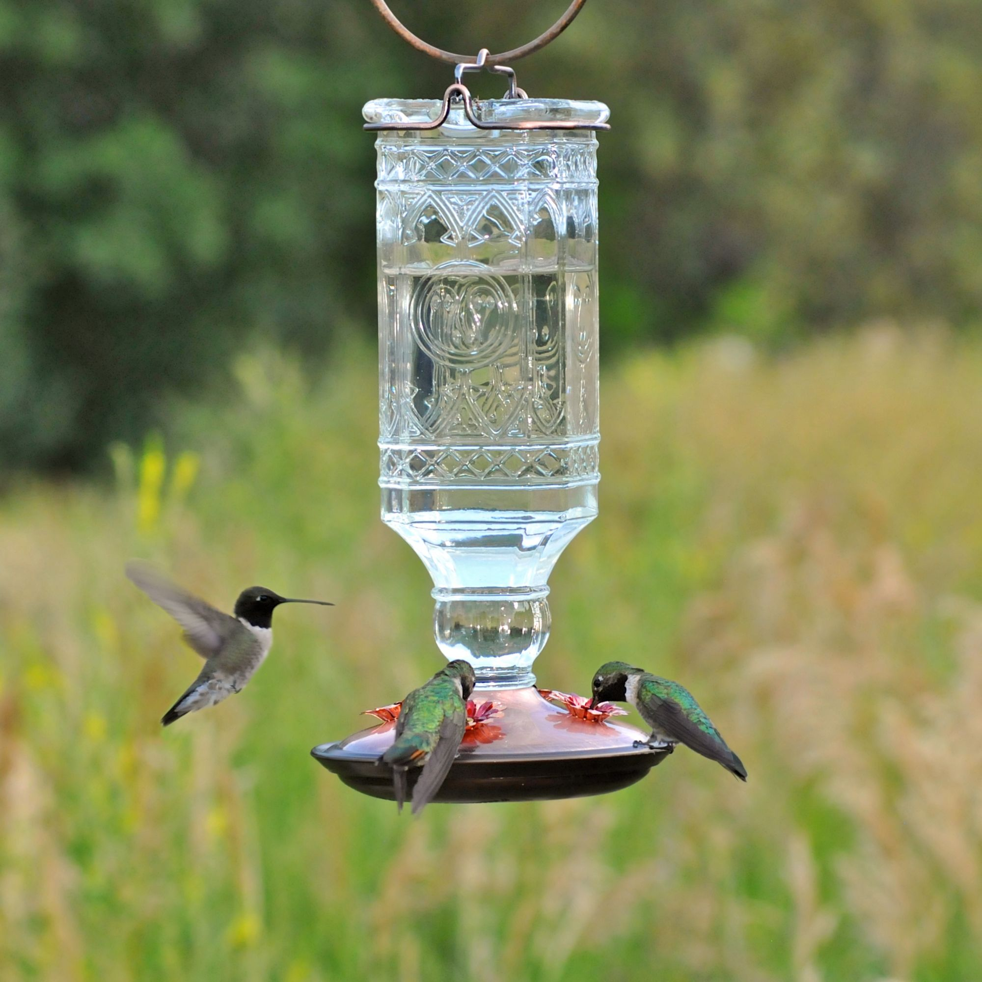 Perky pet clear antique bottle glass hummingbird feeder for Glasses made out of bottles