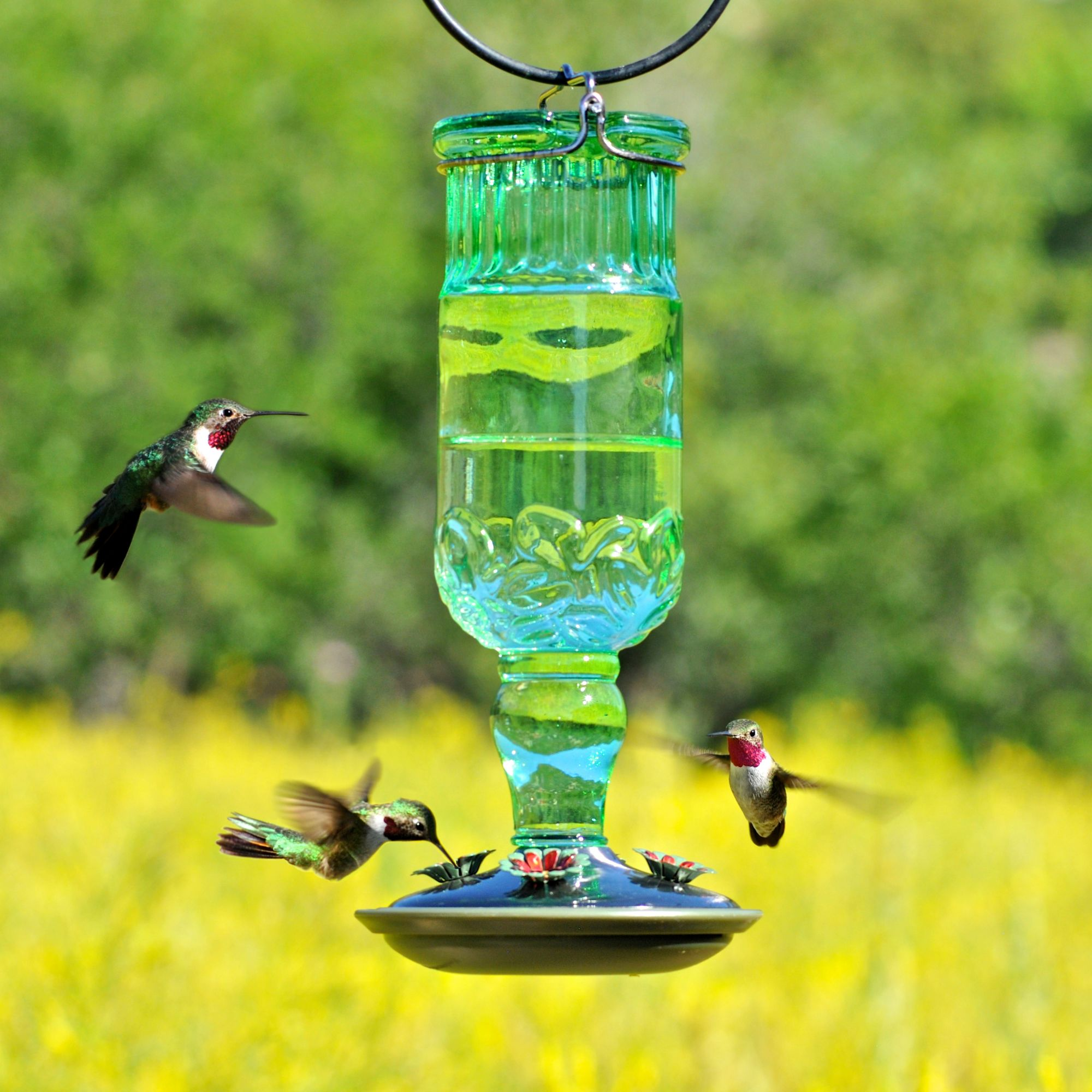 set of hummingbird zoom com duncraft sphere feeder humingbird