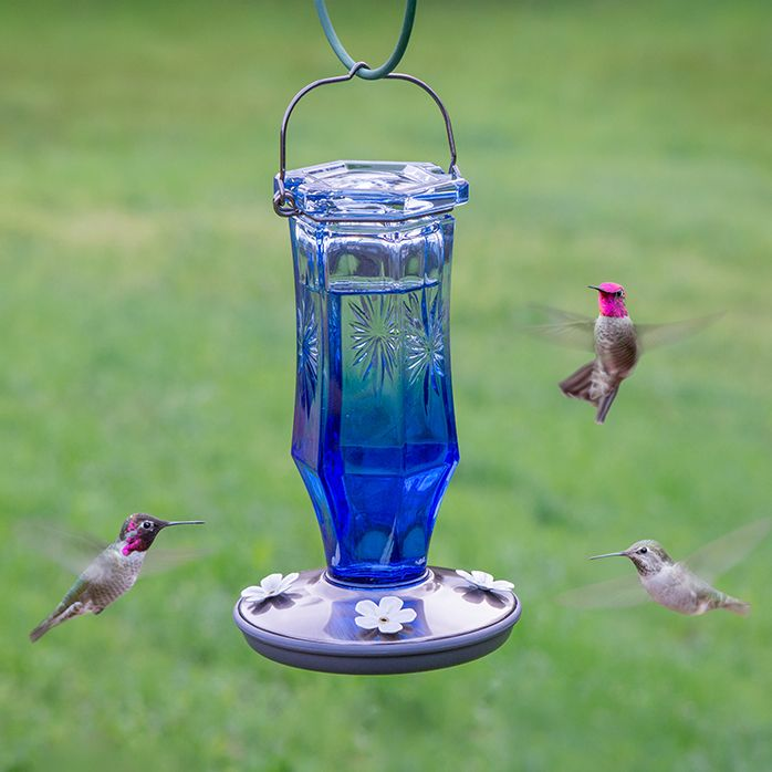 pot hummingbird glass deluxe feeder de creme sale cool for feeders full blown image tubes winsome