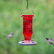 Perky-Pet® Ruby Starburst Vintage Hummingbird Feeder