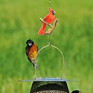 Perky-Pet® Decorative Cardinal Hanging Hook