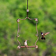 Perky-Pet® Beaded Copper Hummingbird Swing