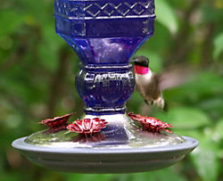 Cobalt Blue Antique Glass Hummingbird Feeder Kit