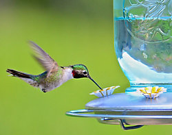 Perky-Pet® Mason Jar Glass Hummingbird Feeder and Waterer Set