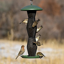 NO/NO® Green & Black Finch Tube Feeder