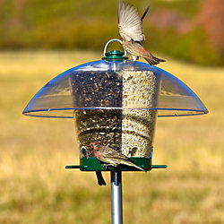 Lyric® Golden Safflower Bird Seed & K-Feeders Carousel Wild Bird Feeder Bundle