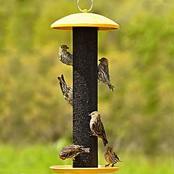Lyric® Finch Food Mix & NO/NO® Finch Tube Wild Bird Feeder Bundle