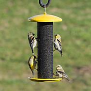 Perky-Pet® Shorty Finch Feeder - .7 lb Seed Capacity