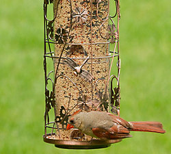 Birdscapes® Copper Meadow Feeder