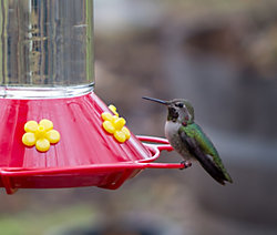 "Buy 3 Get 1 FREE – ""Our Best"" Hummingbird Feeder with FREE Nectar"