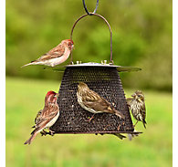 NO/NO® Original Bronze Wild Bird Feeder