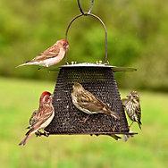 NO/NO® Original Bronze Wild Bird Feeder