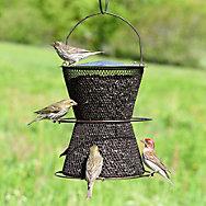 NO/NO® Hourglass Bronze Wild Bird Feeder