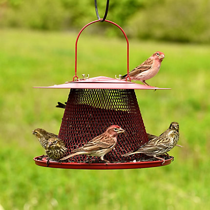 Perky-Pet® Red Cardinal Wild Bird Feeder - 2.5 lb Seed Capacity
