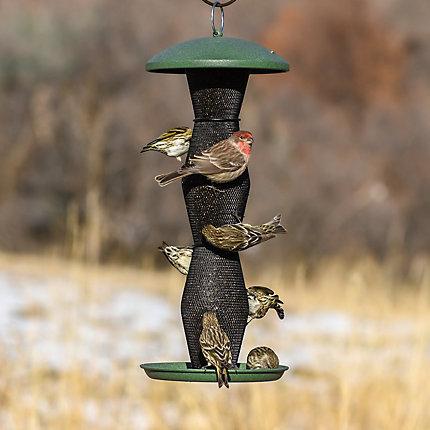 Perky-Pet® Green & Black Finch Tube Wild Bird Feeder - 2 lb Seed Capacity