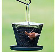 NO/NO® Forest Green with Tray Wild Bird Feeder