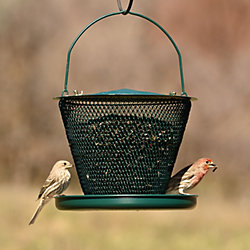 NO/NO® Tray Forest Green Wild Bird Feeder