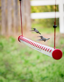 Perky-Pet® 4 Foot Hummerbar® Hummingbird Feeder