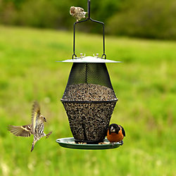 NO/NO® Mixed Seed Lantern Bird Feeder