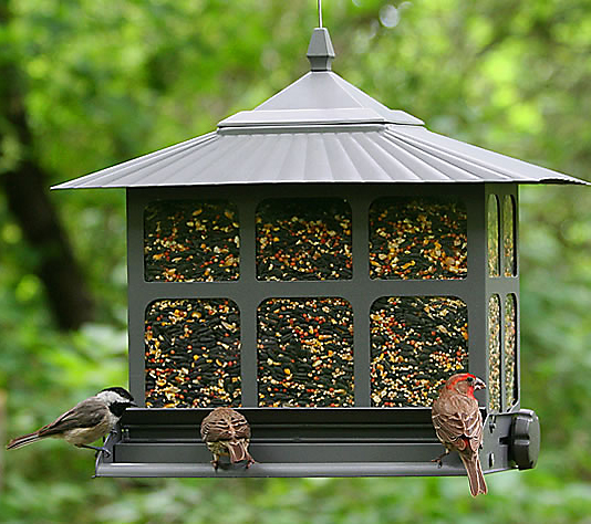 birds at squirrel-be-gone feeder