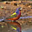 Painted Bunting water