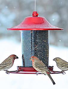 red sparkle feeder
