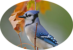 Fall Bird feeding Tips