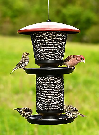 feed birds long term