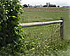 fence and weeds
