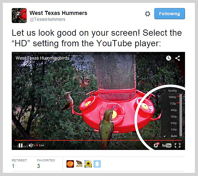 west texas hummingbird twitter