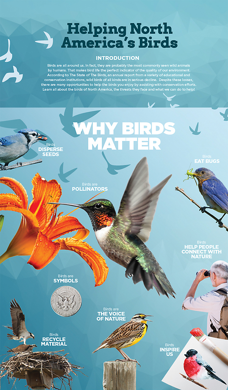 Bird conservation helping north americas birds our hope is that this information can bring new light into why we love birds why they matter and how you can help in bird conservation efforts biocorpaavc