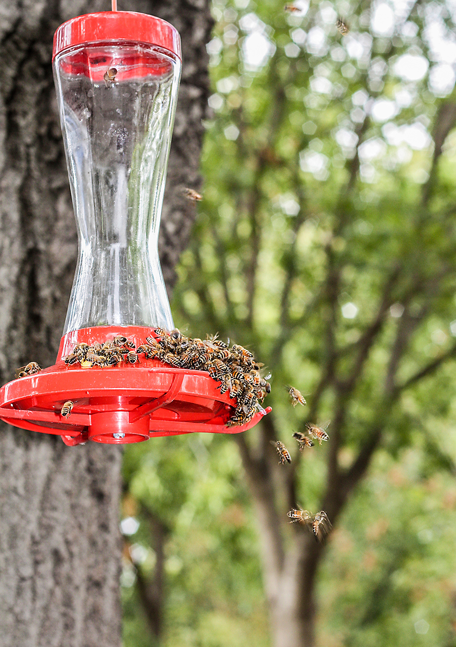 If bees or wasps are constantly at your hummingbird feeder, try removing it for a few days and then slightly relocating it.