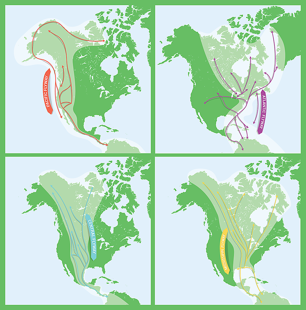 migration flyway maps