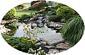 pond with shrubbery