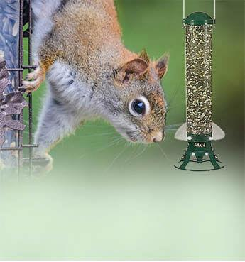 Squirrel-Proof Feeders