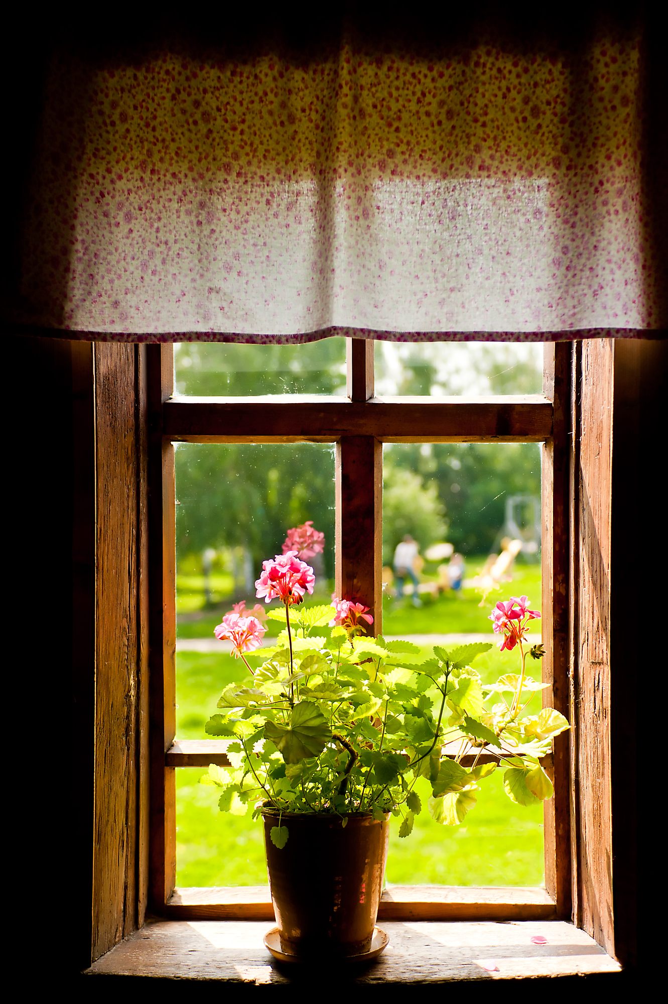 plants in windows