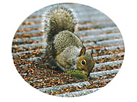 All About Squirrels, Behaviors