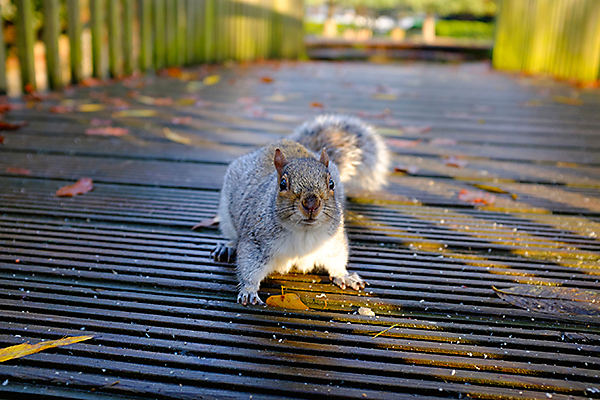 Squirrels have incredibly sensitive noses and will likely find your outdoor seed storage bin.