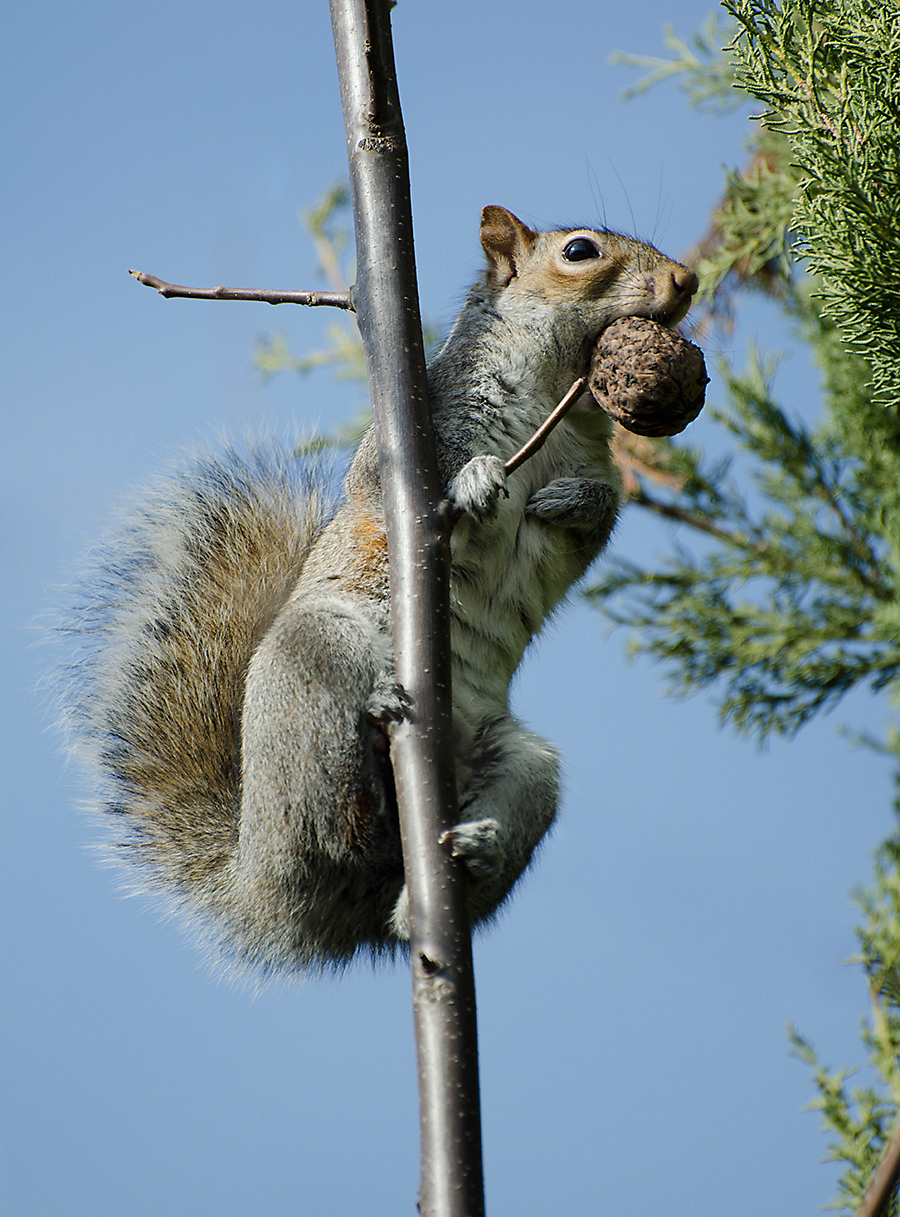 What Are Squirrels Favorite Foods