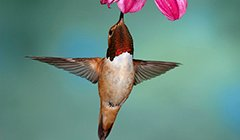 5 Easy Ways to Protect Your Hummingbirds